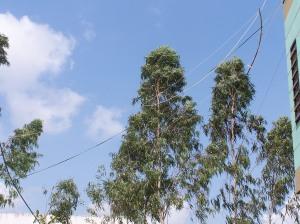 Antenne Moxon 17m filaire horizontale